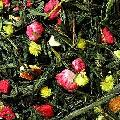 ceai verde 8 Comori