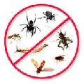 dezinfectie,dezinsectie si DERATIZARE