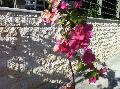 Piatra naturala yellowl socluri garduri