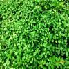 Panouri cu vegetatie cu scop publicitar fatade verzi - Fatad