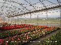 Sere flori-structura profesionala