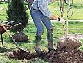 Plantare de pomi fructiferi