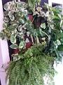 Intretinere plante de interior - Plante Exotice