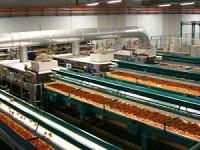 Masini si linii complexe pentru sortare legume si fructe