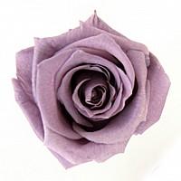 Trandafir Baby Lila Stabilizat