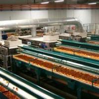 masini sortat legume
