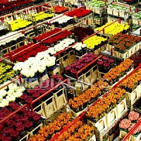 transport flori