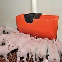 alimentator porci