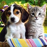 accesorii animale companie