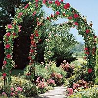 arcada flori