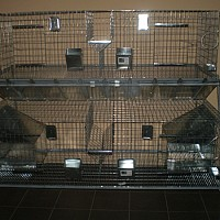 custi pentru animale