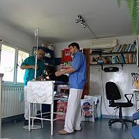 doctor veterinar