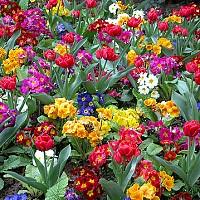 flori gradina