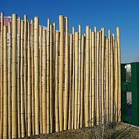 gard bambus