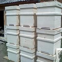 lazi albine
