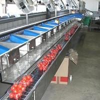 linii procesare legume