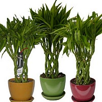 intretinere plante interior