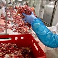 procesare carne