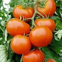 rasaduri legume
