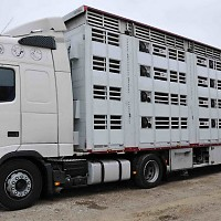 transport animale intern