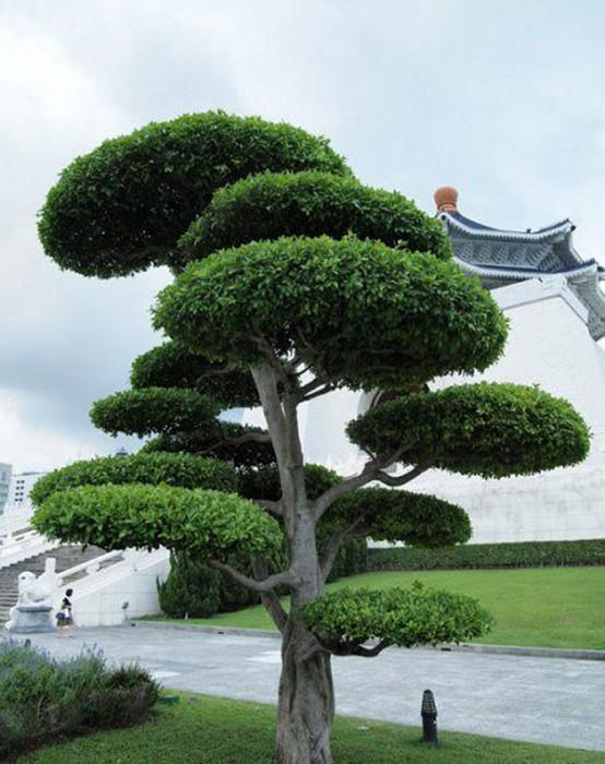 Arbusti ornamentali 10 oferte de la 7 firme for Arbusti ornamentali
