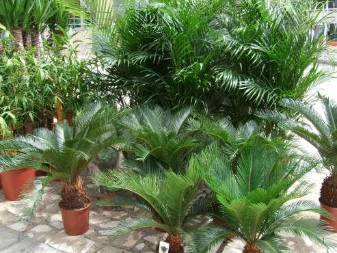 Plante ornamentale 14 oferte de la 11 firme Plante decorative